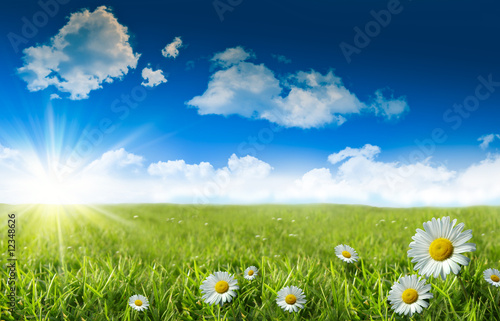 Foto op Plexiglas Gras Wild daisies in the grass with a blue sky
