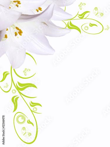 Foto-Kissen - Blumenhintergrund,Lilie weiß