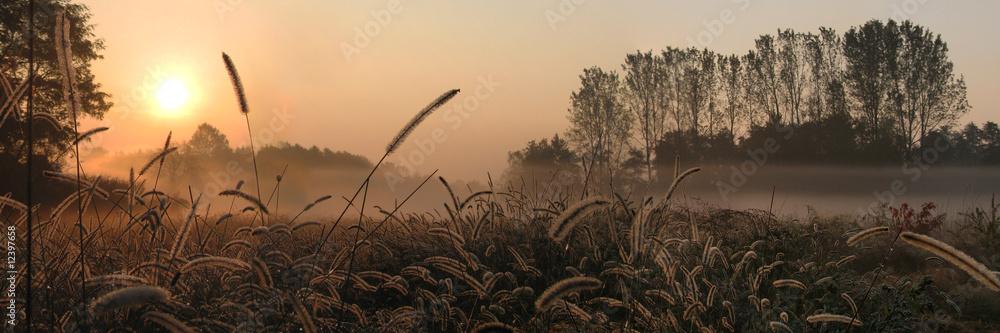 Fototapeta alba