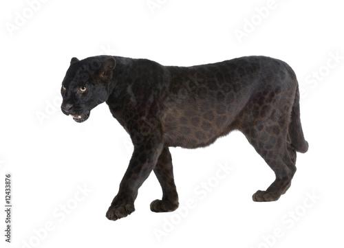 Tuinposter Panter Black Leopard (6 years)