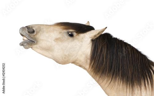 Fotografiet horse
