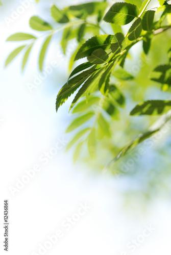 Fotorollo basic - foglie (von Anna Khomulo)