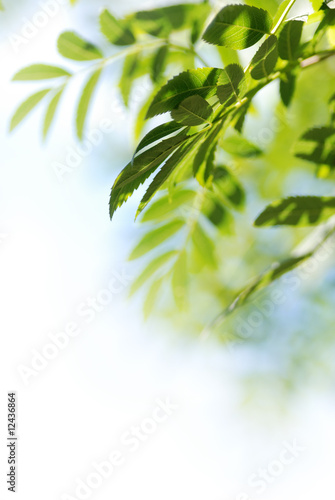 Foto-Schiebegardine ohne Schienensystem - foglie