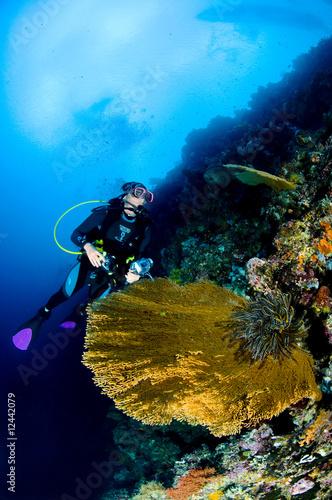 Underwater photographer, Asia, Photo sous-marine