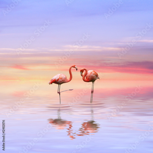 Garden Poster Flamingo Flamingos love