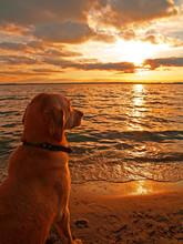 Dog Watching Sunset