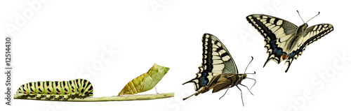 La pose en embrasure Papillon Butterfly metamorphosis
