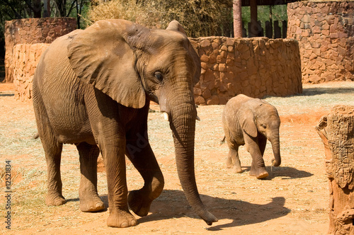 Garden Poster Elephant Elephants
