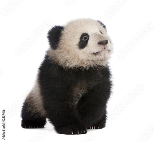 Stickers pour porte Panda Giant Panda (6 months)