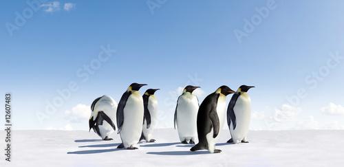 Photo sur Toile Pingouin Emperor penguins
