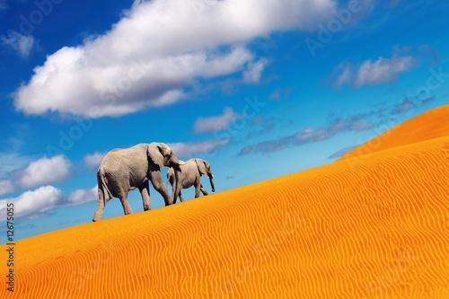 Poster de jardin Desert de sable Desert fantasy, elephants walking