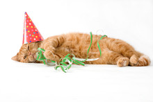 Adorable Red Cat Having A Birhday Party