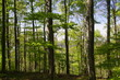canvas print picture - Wald / forest