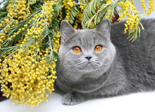 Portrait Of Cat With Yellow Flowers.
