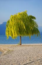 Baum Des Lebens Am Strand