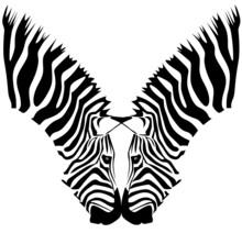 Coppia Zebre
