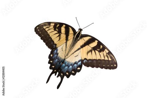 Photo yellow swallowtail on a white background