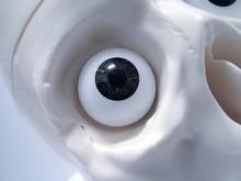 Skull Eye Socket