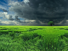 Dark Clouds Over The Field