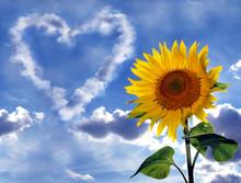 Wolkenherz Und Sonnenblume