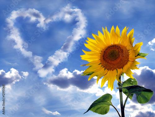 Foto-Banner - Wolkenherz und Sonnenblume