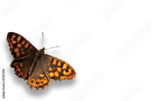 Deurstickers Vlinder papillon seul