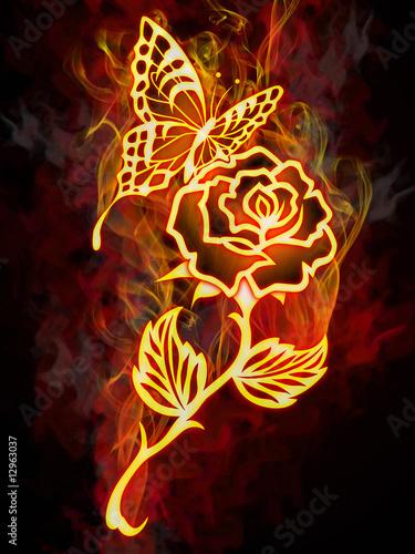 ognisty-motyl-na-plonacej-rozy