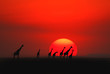 canvas print picture - African sunset in Masai Mara, Kenya
