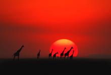 African Sunset In Masai Mara, Kenya