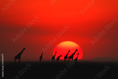 Photo sur Toile Rouge African sunset in Masai Mara, Kenya