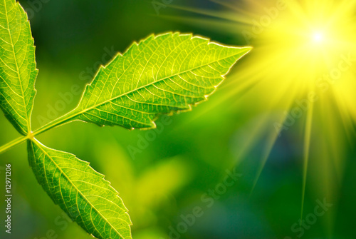 Foto-Banner - Fresh green leaf highlighted by sun.
