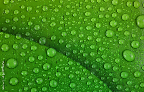 Water drops on bright green background Canvas Print