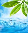 Leinwandbild Motiv Water drops falling from wet leaf