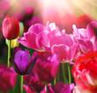 Leinwandbild Motiv Beautiful spring flower