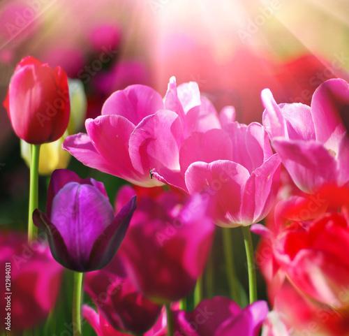 Plakat Piękny kwiat wiosny