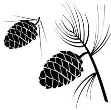 Vector Illustration Of Pinecone Wood Nature