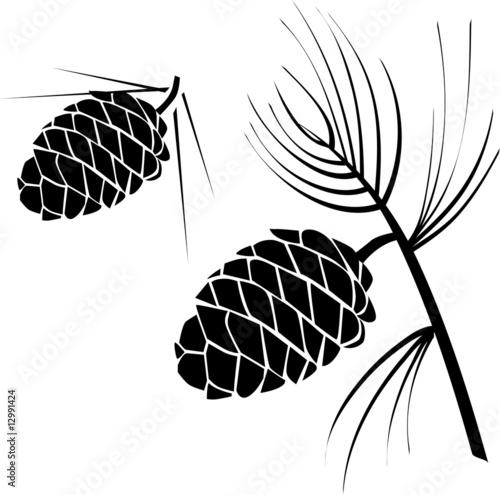 Fotografie, Obraz  vector illustration of pinecone wood nature