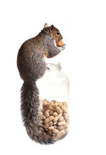 Squirrel Has Found A Unique Wa...