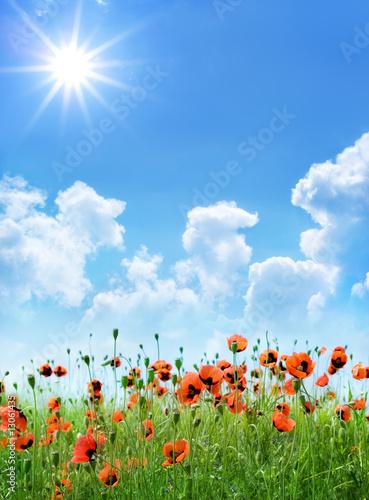 Foto-Schiebegardine ohne Schienensystem - Red poppies (von Tryfonov)