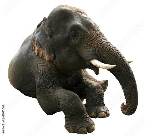 Photo  elephant post