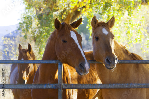 Photo  Horses in the pasture on a ranch