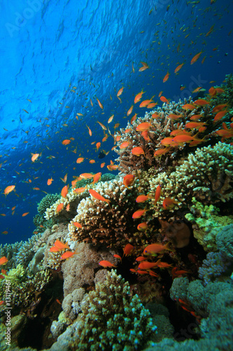 Poster Sous-marin Beautiful Coral Reef