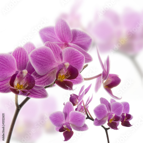 Foto-Schiebegardine ohne Schienensystem - Orchidee (von spinetta)