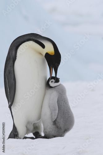 Foto-Flächenvorhang ohne Schienensystem - Emperor penguins (von Gentoo Multimedia)