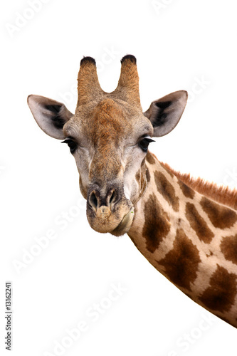 Photo  Giraffe portrait