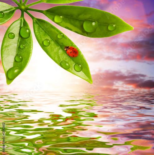 biedronka-siedzi-na-zielonym-lisciu