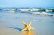 Sea star on a beach sand