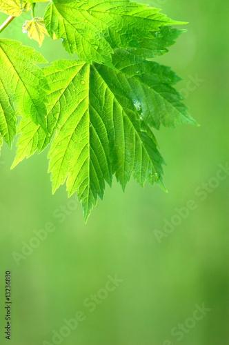 Foto-Duschvorhang - Grünes Blatt (von Stefan Körber)