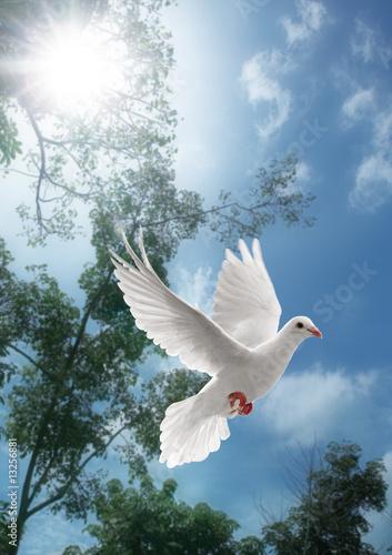 Foto-Flächenvorhang ohne Schienensystem - white dove flying (von Okea)