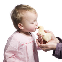 Toddler Kisses Baby Chick